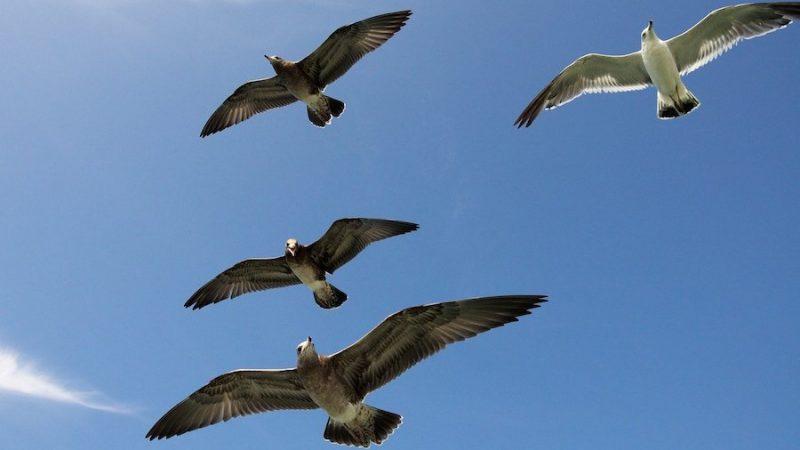 Skandal inom Gruvlyckans Fågel